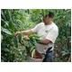 ハワイコナ・ハワイコナクイーン農園 エキストラファンシー【粉 中挽き】 200g - 縮小画像3