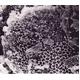 「宇宙のくつ下」シリーズ  Air Fit(エアフィット) ルームシューズ ブラック Lサイズ - 縮小画像5
