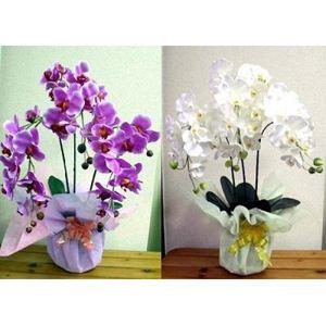 光触媒胡蝶蘭3本立て ホワイト - 拡大画像
