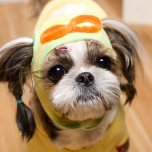 Its Dog(イッツドッグ) コスプレ帽子/ポロロ【S】 - 拡大画像
