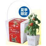 (まとめ)アーテック ベジコンテナ トマト 【×15セット】