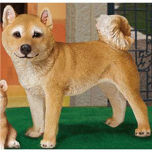 NEW本物そっくりアニマル 柴犬