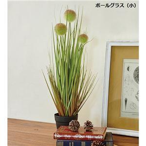 人工観葉植物/造花 【小 ボールグラス】 高さ約53cm ポリ塩化ビニール 『インテリアグラス』 〔リビング 店舗〕 - 拡大画像