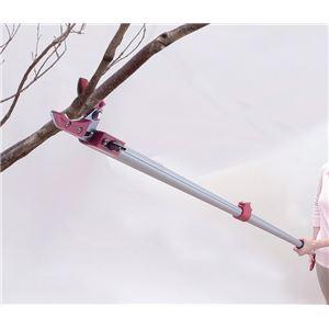 伸縮式高枝切りハサミ 【4点セット】 ノコギリ/太枝切りハサミ/高枝切りハサミ/暫定ハサミ - 拡大画像
