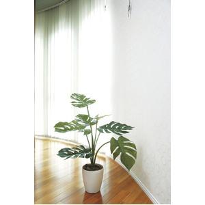 光の楽園【光触媒/人工観葉植物】0.75m モンステラ - 拡大画像