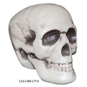 (まとめ)SUNSTAR Realistic Skull(リアル頭蓋骨)【×2点セット】 - 拡大画像
