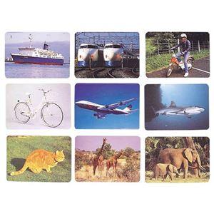 DLM 言語訓練写真カード1 生物と乗物2214S - 拡大画像