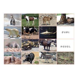 DLM 多目的言語カードセット動物編CD付KK0491 - 拡大画像