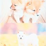 ふわふわアニマルマット【仲良し・お散歩ワンちゃん2枚セット】