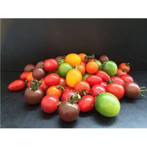 カラフルミックスミニトマト 1kg