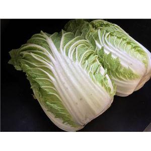白菜 4玉入/cs