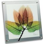 X-RAY ガラスアートフレーム(M)「アスペンフォール」