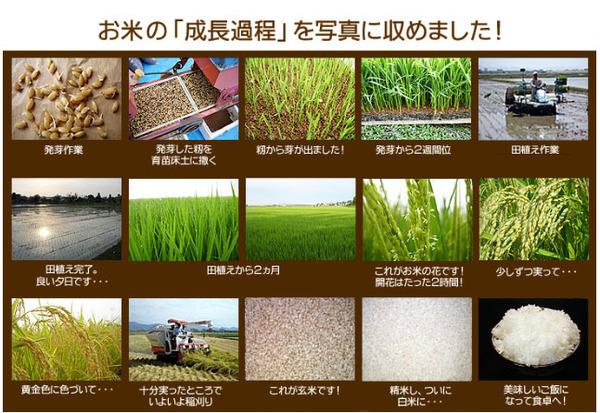 平成27年産 中村農園の新潟県長岡産コシヒカリ白米20kg(5kg×4袋)